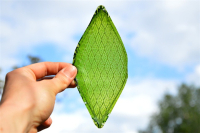The First Artificial Leaves Was Born