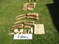 Airfreight Transhipment Turns out to Be Ivory