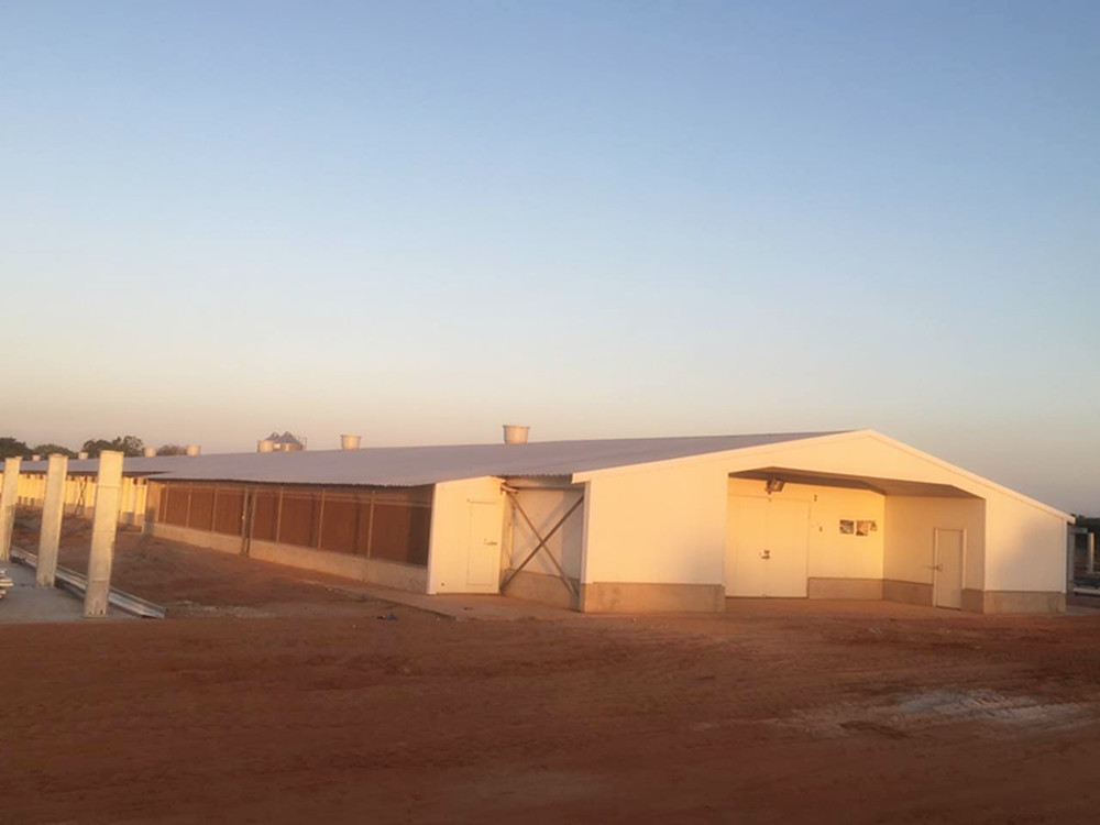 Tunkey Broiler Project in Mozambique