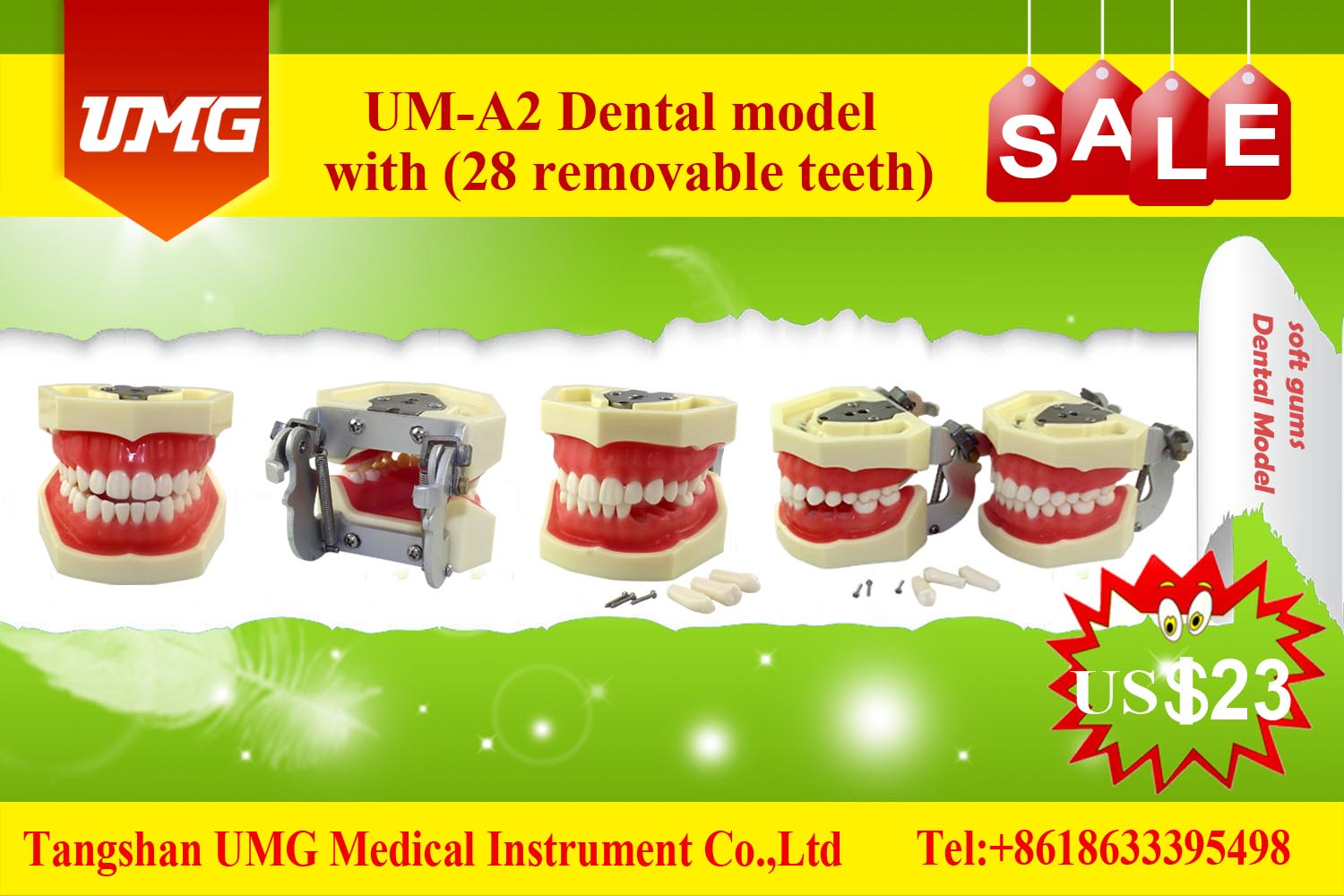 UM-A2 soft gums dental model with 28 removable teeth