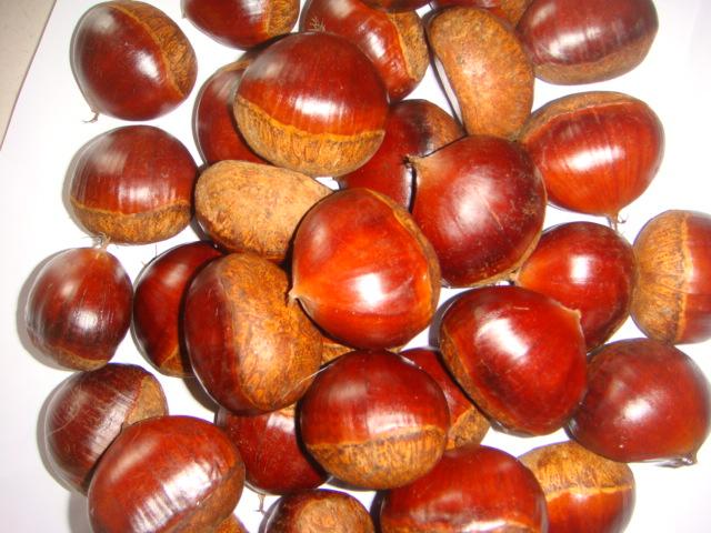 Chinese best fresh chestnut
