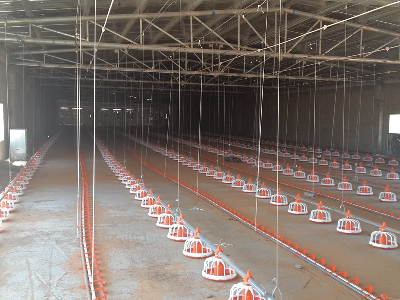 super herdsman machinery broiler production project