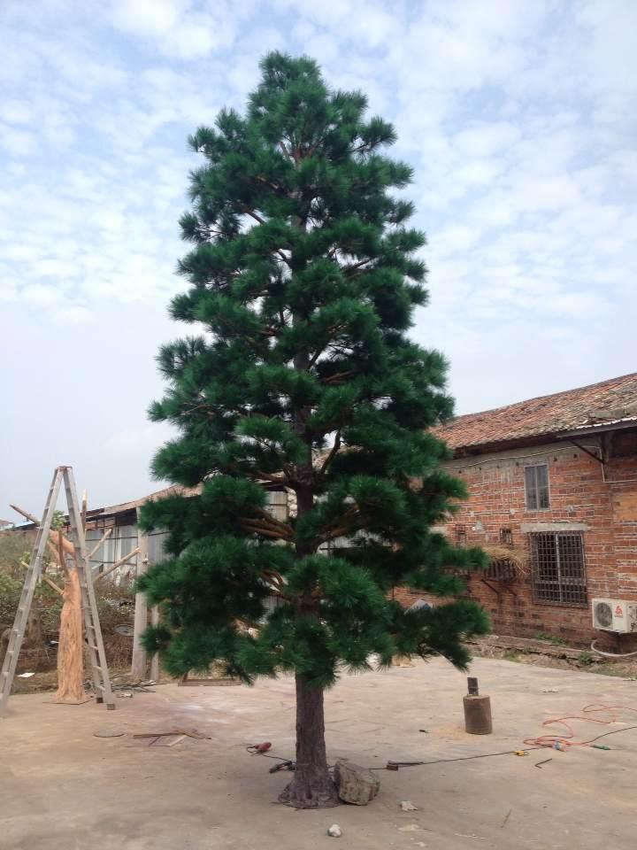 6m pine tree