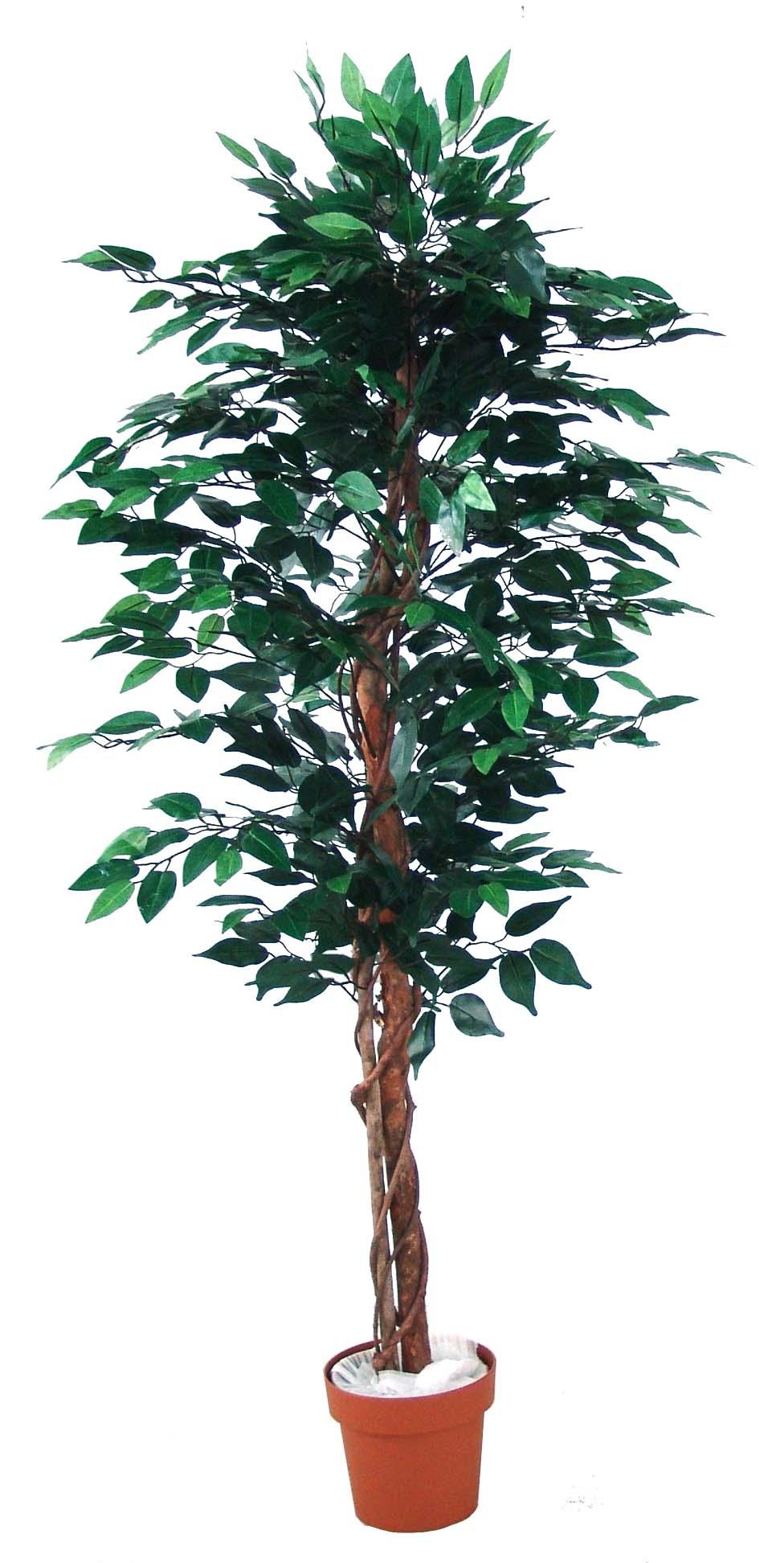 best selling ficus tree 756lvs.