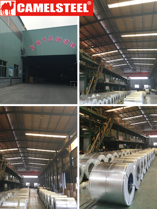 Supply ppgi/ppgl/gi/gl/roofing sheet from camelsteel