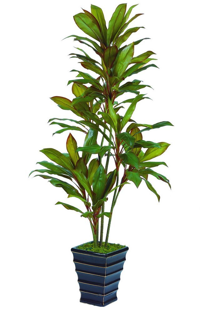 Best selling Autumn Dracaena plant different colors 114lvs