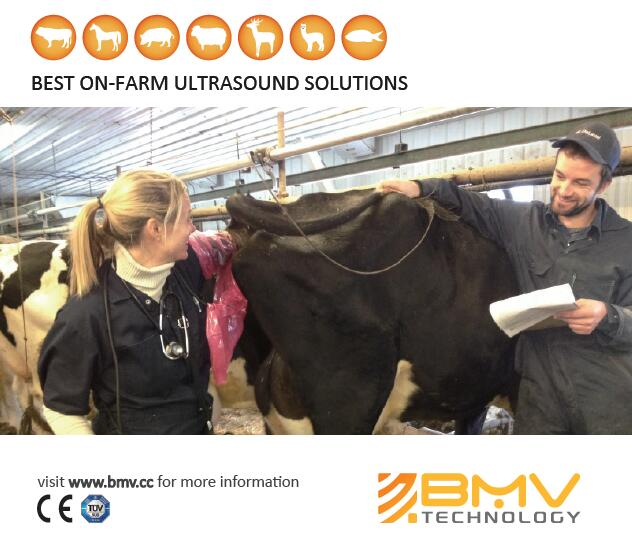 Big Animal Veterinary Ultrasound Solutions