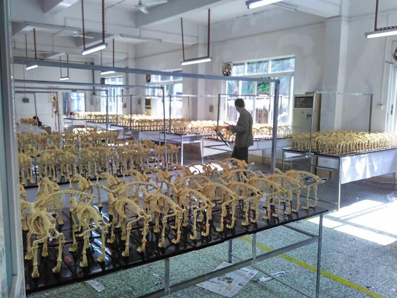 GZ Rongzhiyou factory show 4