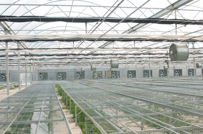 Flower green house