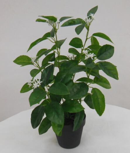 Best selling Orange Tree in blooming