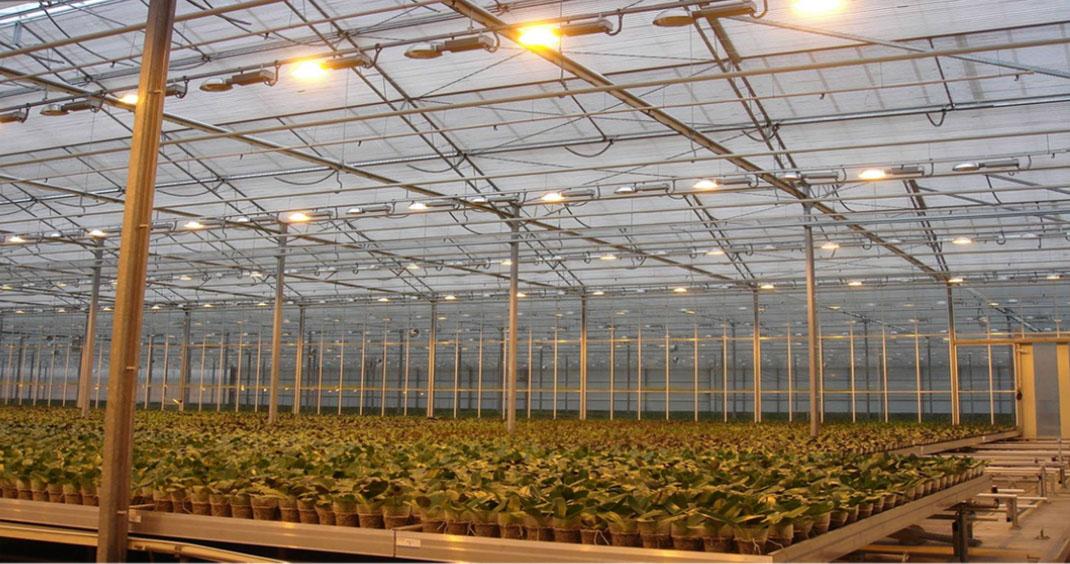 Green house lighting
