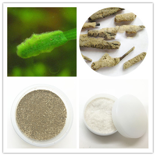Application of Freshwater Sponge Spicule in Cosmetics
