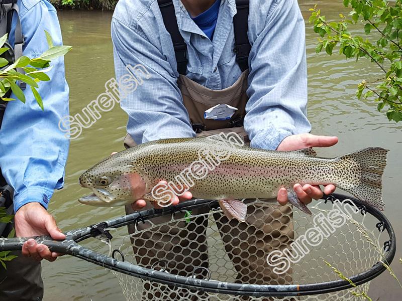 tenkara fly fishing rod