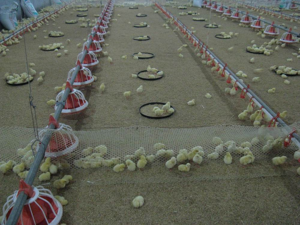 professional supplier of automatic poultry equipment for chicken with copetitive price,good quality
