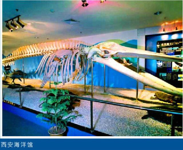 Xi'an marine museum