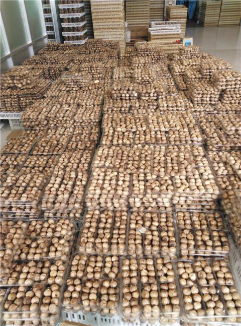 black garlic export
