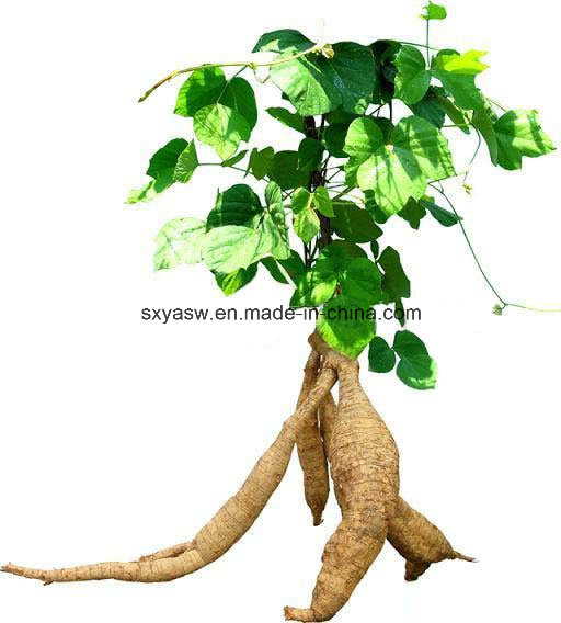 About Kudzu Root Extract