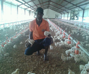 Chicken house in Nigeria