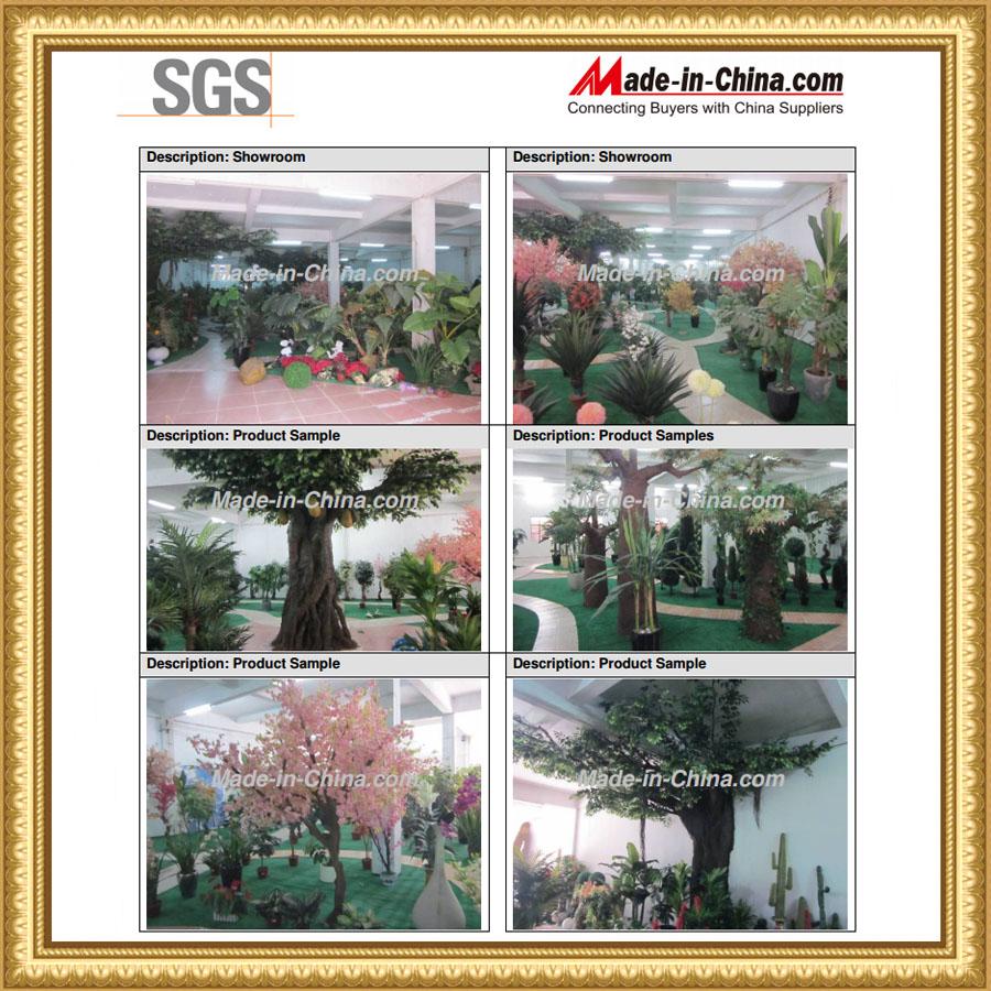 SGS of showroom certificate