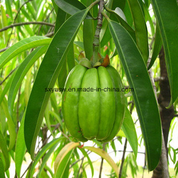 More About Garcinia Cambogia Extract