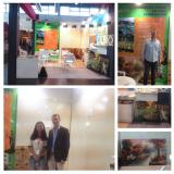 Marmomacc 2015 Italy Fair, Emin Nano Glass