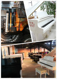 Carod piano office Showroom