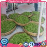 Qingdao Xiaoyang Spring Tea