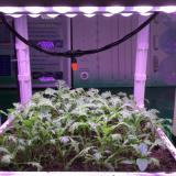 37w full spectrum led grow light module for all plants
