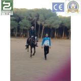 Customer invites us to ride a horse in Algeria