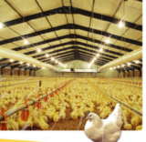 broiler equipment chicken poultry house