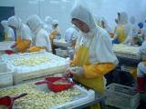 Fresh Peeled Garlic Production