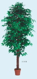 Best selling 210cm ficus tree