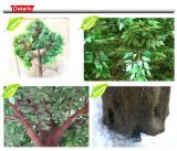 Ficus Tree Details
