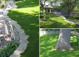 grass for backyards and decorations