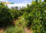 Nicepal Lime Farm