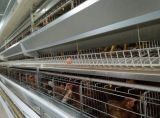 layer chicken poultry cage