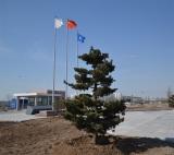 Qinshao Tree