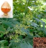 Herbal Natural Feed Additive-Macleaya Cordata Extract 60% Sanguinarine