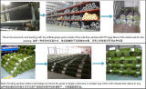 two different kinds of Package for the artificial grass