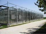 Multi-span Greenhouse