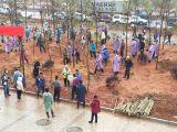 Tree-planting Day
