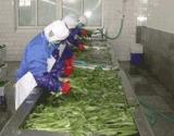 Vegetable Prodution
