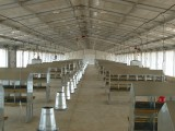 poultry house chicken farm for broiler