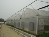 Multi-span Tunnel Greenhouse