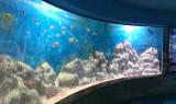 Modern Wall Decoration Aquarium