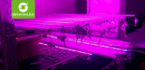 T8 LED grow tube for Belgium customer