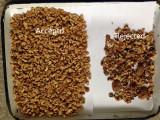 Walnuts Sample
