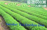 Deedar Tea Garden 2