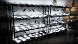 COB LED Downlight Under Production
