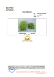 Good quality artificial grass passd the aging test by SGS